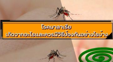 โรคมาลาเรีย เกิดจากอะไรและควรมีวิธีป้องกันอย่างไรบ้าง